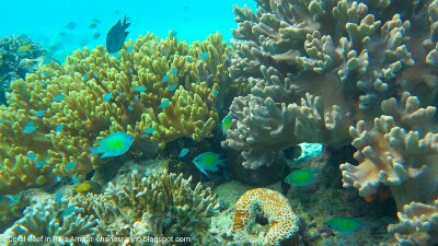 Coral reef and fish in Raja Ampat