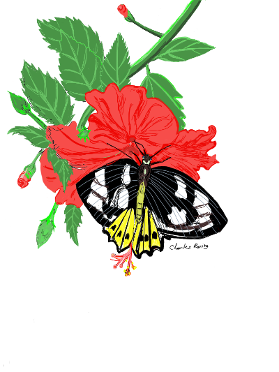 hibiscus flower and butterfly