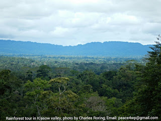 Rainforest in Klasow Valley of Sorong regency, West Papua, Indonesia