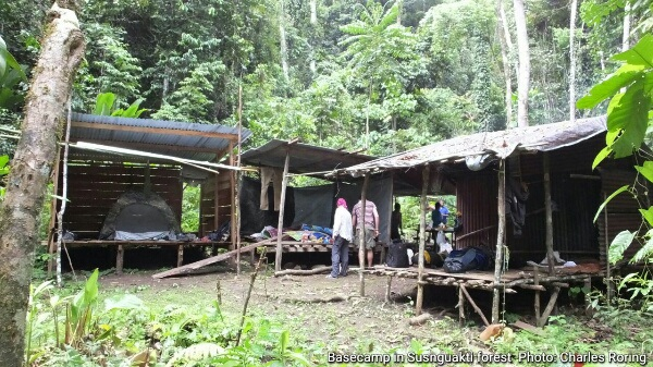 basecamp for tourists who want to watch Lesser Birds of Paradise in Susnguakti forest of Manokwari