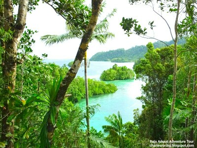 Snorkeling Adventure in the islands of Raja Ampat