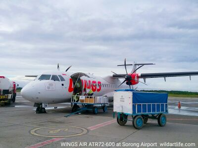Turboprop airplane ATR 72 of Wings Air at Domine Eduard Osok airport of Sorong city, West Papua